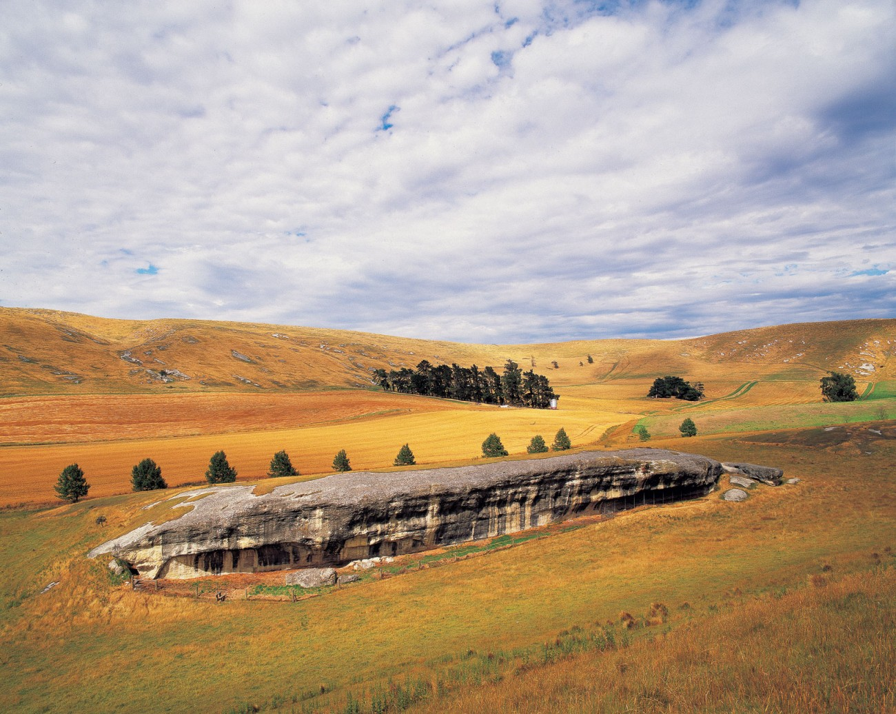 Many shallow caves, such as this long limestone shelter at Timpendean in Weka Pass, reveal a long history of repeated use thanks in large part to a bountiful food supply. The area was once heavily forested and birds, including moa, weak, kereru and kiwi, were abundant. Recent excavations of the shelter floor found evidence of recurring occupation between 600 and 1000 years ago.