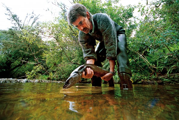 NIWA scientist Ben Chisnall releases a tagged longfin eel into a streamat Mt. Bruce National Wildlife Centre, Wairarapa. Thirty eels havebeen tagged in an effort to better understand the breedingdynamics and mortality of the species, which has come under increasingpressure from fishing and habitat loss.