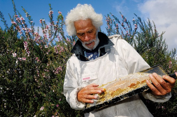 Harihona Rata inspects a tray of manuka honey from his hive. Many monofloral honeys fetch high prices for their distinctive flavours or qualities, and manuka honey—with its antibacterial properties—is a prince among princes.