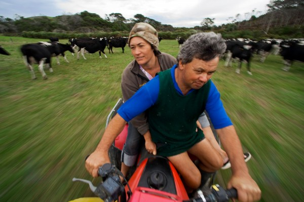 Far North dairy farmers Mattie and Georgina Covich lost tens of thousands in earnings when they dried their cows off three months early. They sent the herd instead to Helensville to find fodder, but the drought struck there too and the herd returned in worse shape than when it left.