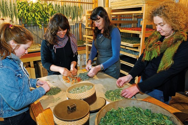Barefoot doctoring: herbalist Valmai Becker (third from left) introduces Georgia, Madeline and Julie to the art of custom-made herbal teas in the drying room of her herb farm in Okuti Valley, Banks Peninsula.