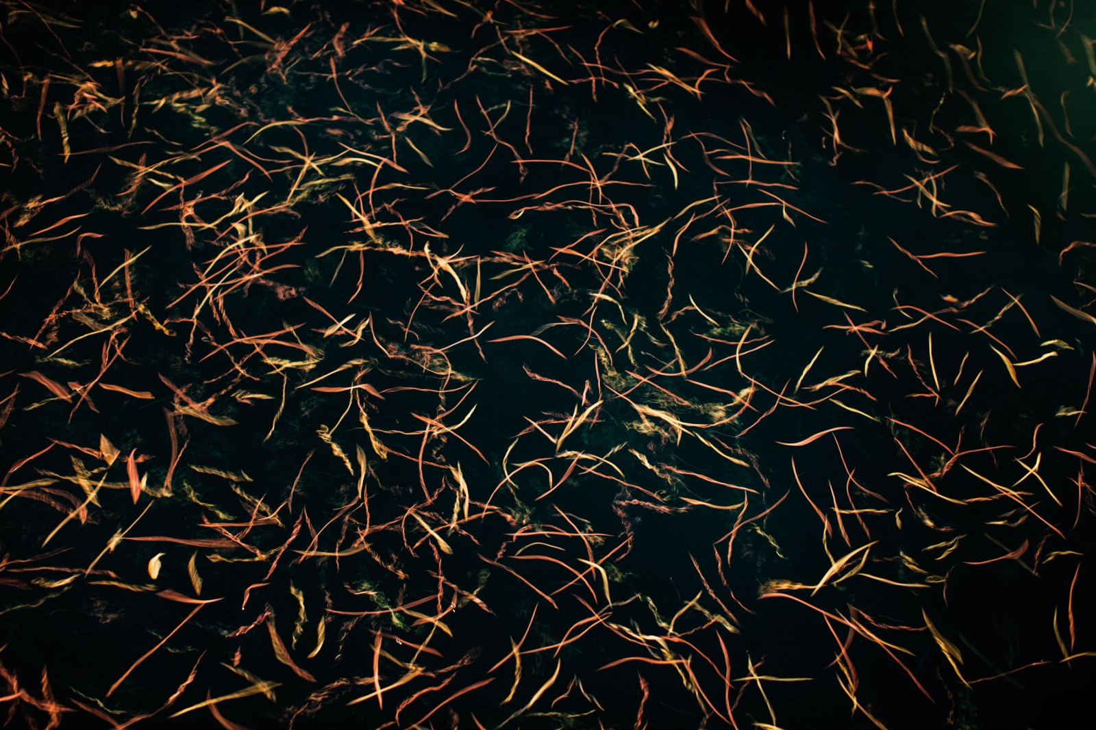 Like moths to a flame, polycheate worms (Nereis spp.) gather beneath the loom of a night light hung from the stern of the ship. Scientists had hoped to attract light-sensitive juvenile and larval fish, but found a massive aggregation of the four-centimetre worms instead. Normally living in burrows in the seafloor, both sexes swim to the surface under the cover of darkness, using powerful pheromones to synchronise this behaviour. There they will spawn, releasing gametes and sperm in unison and en masse to increase reproductive success and reduce the risk of predation.