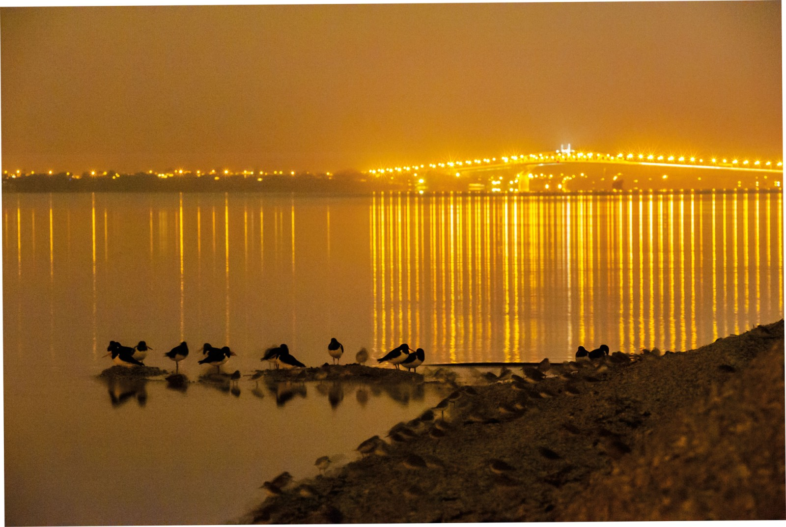 High tide and darkness—only ever partial, due to the loom of city lights—see oystercatchers and dotterels roosting on the seaward edge of Motu Manawa. A slip of land in a busy harbour, the island remains an important feeding ground for migratory shorebirds, and holds populations of threatened land species such as fernbird and banded rail. Once destined to be sacrificed for a container port, Pollen Island dodged the commercial bullet and now serves as a container of nature and an inspiration for anyone who cares to get mud on their boots in an urban wilderness.