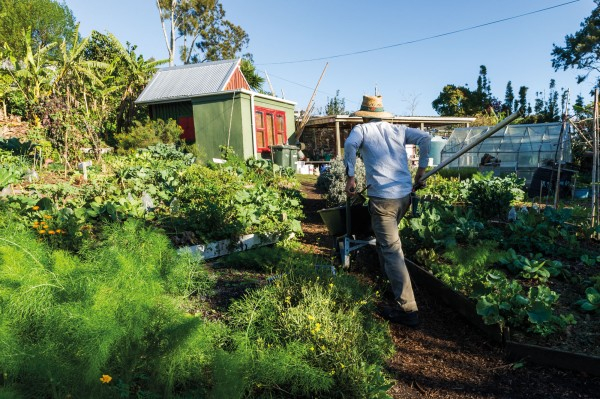 Adrian Roche steers a wheelbarrow through the produce of Kelmarna Organic Gardens, established in the leafy Auckland suburb of Herne Bay in 1981 as a working model of sustainability in an urban setting. The gardens are open to the public, tended by a community mental health service provider, and have been organically managed for 33 years without the use of chemical sprays or artificial fertilisers. However, while organic practices offer a lot to inform conventional production, the environmental advantages are far from clear cut. Studies have found, for instance, that greenhouse gas emissions are not always lower from organic farming, and that the yields are generally lower, requiring more land area to produce the same amount of food.