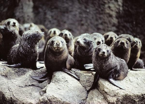 54_Seals_12