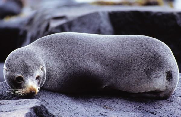 54_Seals_20