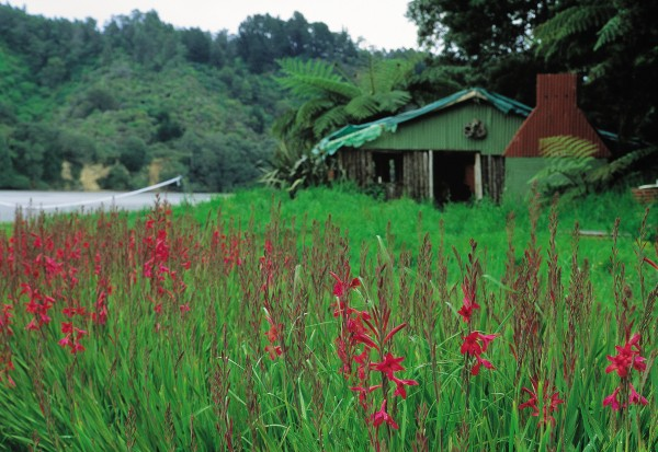 Wild Watsoniaflourishes beside a ponga whare on Hokianga Island, which is occasionally used as an Outward Bound-style camp for schoolchildren. The island has its own spring, and in earlier times Maori built a marina for their waka beside the island and planted extensive gardens and orchards. Hokianga's most famous resident was the Maori leader Te Kooti, who lived out his final days here.
