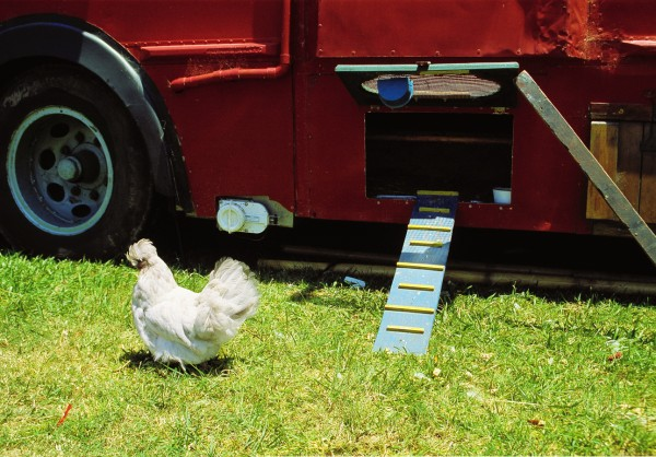 Hens are one source of fresh produce not incompatible with a nomadic existence, and several gypsy homes come complete with chicken coops.