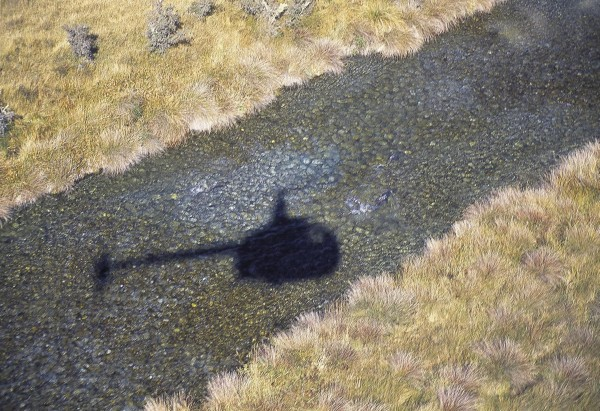The clear area of streambed above the helicopter's shadow is where a salmon (visible towards the left) has turned over gravel while burying her eggs. Such is the importance attached to the salmon recrea- tional fishery that aerial surveys are regularly undertaken by Fish and Game New Zealand, the body which manages the fishery.