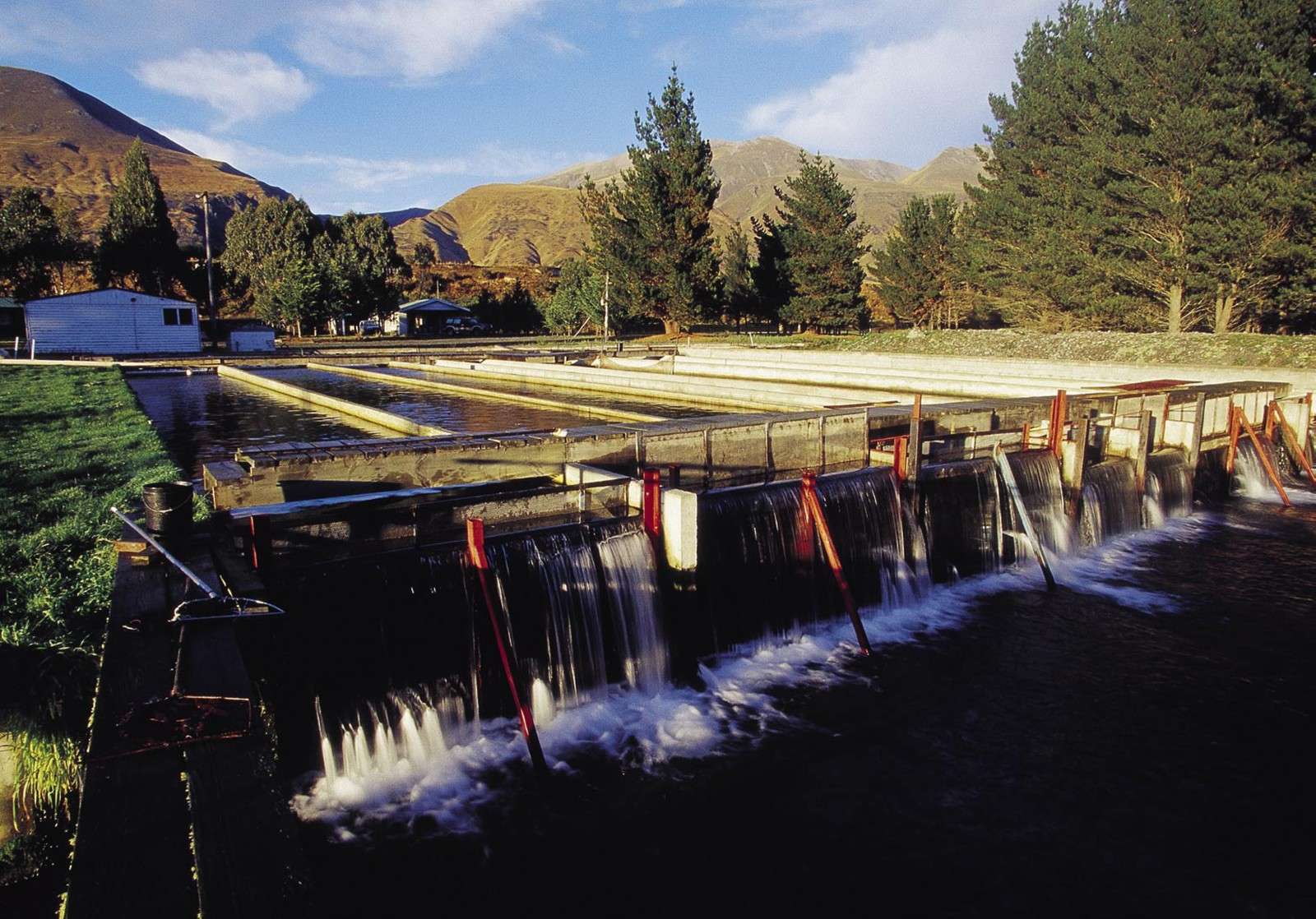 Montrose Hatchery, near the town of Rakaia, rears salmon from eggs to smolt stage.