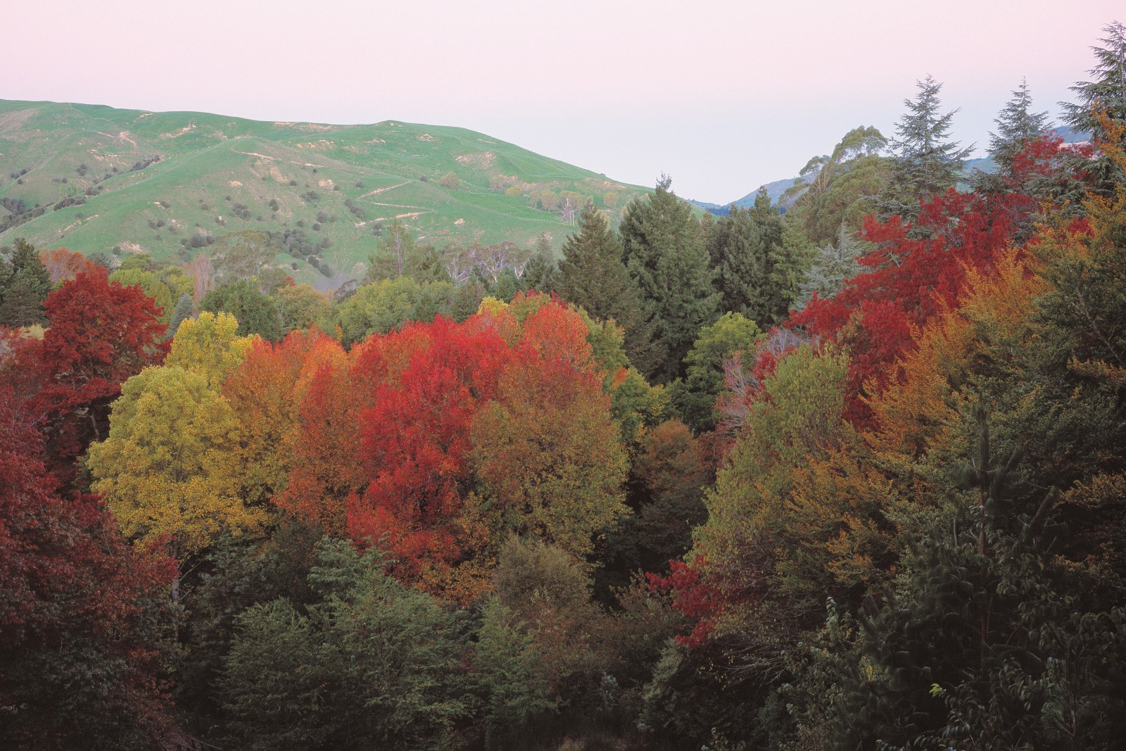 Overlook the background of grassy hills and visitors could imagine themselves in New England, where the same species of maple oak, dogwood and birch blaze with colour each autumn.