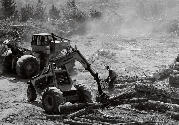 Dust and fumes fill the air at the Manu Block skid as man and machine sort, shift and process the never-ending crop of pines in the summer heat.