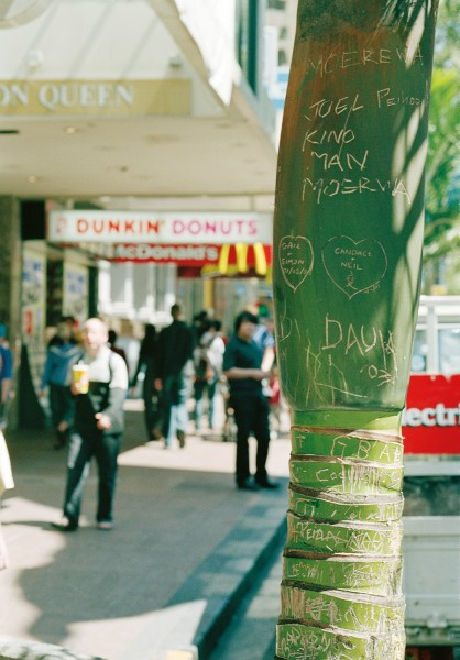 The bulbous base of a nikau crown, formed by the overlapping bases of the fronds, can prove an irresistible surface for urban graffitists. Fortunately, once the outermost frond falls away—leaving a circular scar on the trunk—the bulb will be green and clean once more.