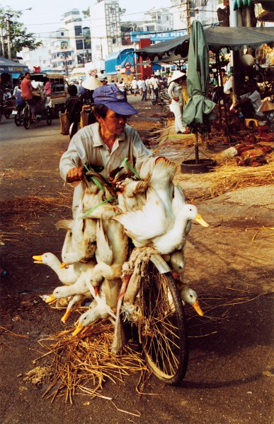 Peddling geese in Vietnam. Fresh poultry is the preferred meat throughout much of southeast Asia.