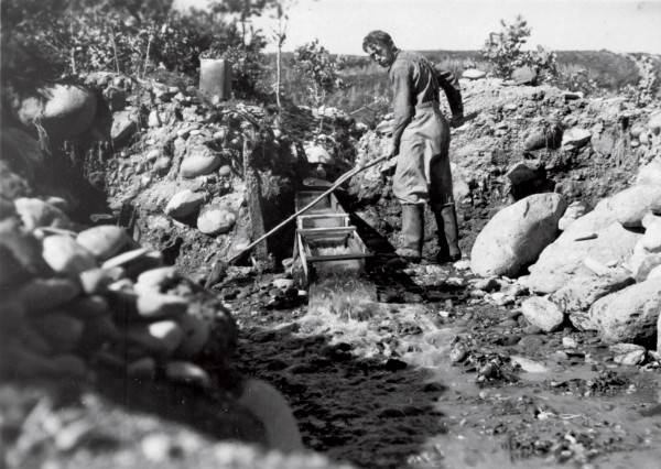 Miners of alluvial deposits, such as Don Harvey, photo- graphed at Doctor's Creek, Golden Bay, in 1939, shovel gravel into a sluice box, trapping the heavy flakes of gold in slats or matting in the bottom while rock and mud are washed away.