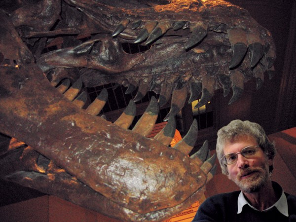 A contrast between top predators in the Mesozoic and Cenozoic could not be more vivid than in this comparison of skull sizes between Tyrannosaurus rex and editor Warren Judd. Big, mean and hungry was the successful template for the top job in the age of the dinosaurs, but evolution produced an entirely different solution for the mammals. In terms of economy, a large brain is an expensive organ needing a lot of fuel, but that requirement is trivial compared to the energy needs of a super-sized reptile.