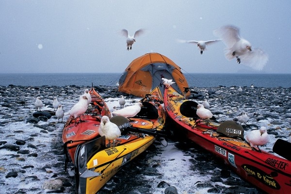 While the South Georgian wildlife is perfectly adapted to thriving in the Antarctic conditions, our kayaks always seemed to provide the roost of choice for sheathbills.