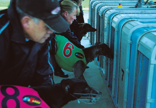 Dogs are loaded into the narrow racing boxes odd numbers first, then evens.
