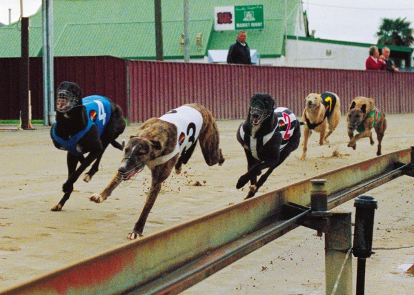 May 18, 2006, 2 p.m., Hatrick raceway, Wanganui. Gary Harding's dog Thrilling Chance leads in the last bend of the 520 m race, going on to win in 30.93 seconds, earning Harding $720. Second was number 3, Unruffled, who won $300, and third was Thrilling Bart (number 2) who took $180.