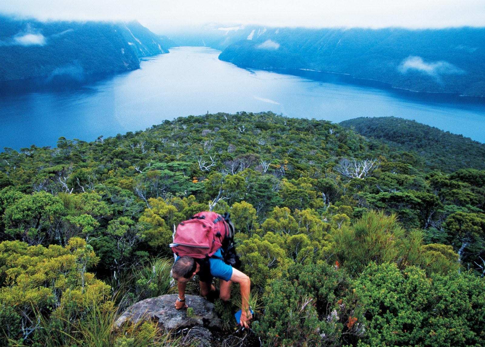 Whether high and rugged like Secretary Island or low and smaller like Chalky Island, Fiordland's islands are again attracting interest as possible refuges for endangered wildlife—once existing pests are removed.