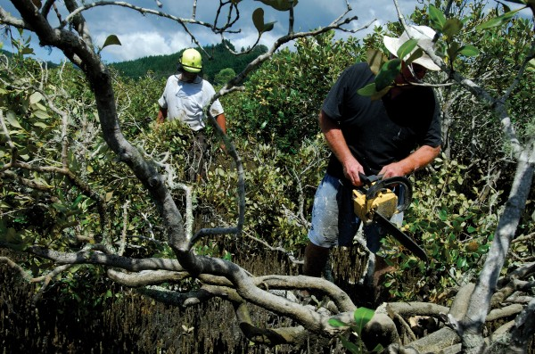 """Calling it """"the gorse of the sea,"""" locals defy a by-law prohibiting the removal of mangroves from the Moanaanuanu Estuary, claiming that 25 years ago the area was a beautiful, white sandy beach."""