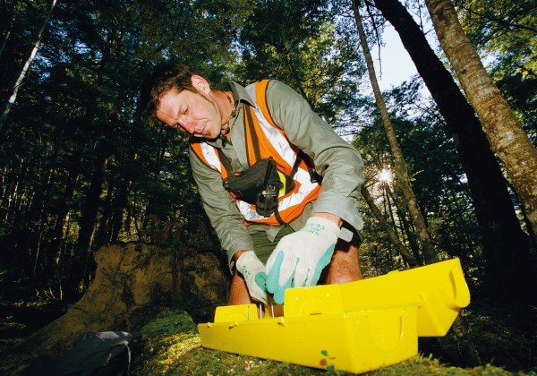 Wildlife protection programmes like DOC's Operation Ark—here in the Hawdon Valley in Arthurs Pass—target stoats and rats that run riot when beech forest masts, causing a predator/prey pile-up that leaves native bird populations in tatters.