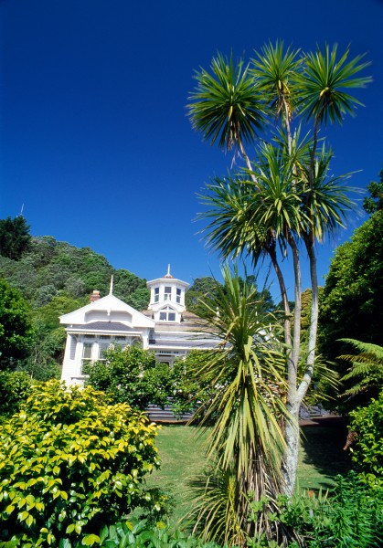 "The distinctive ""tuft-on-a-stick"" shape of cabbage trees has made them popular with landscapers, both in New Zealand and overseas. In this Auckland garden the taller tree has given rise to a ground ""re-sprout"" at its left. The leaves of juveniles are longer than those of adult trees, and are retained on the tree longer, producing a characteristic ""ruff"" of dead leaves which hides the trunk."