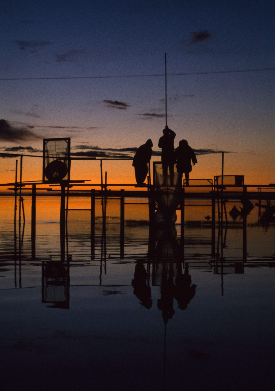 "Sunset on the Okuru River, and three Aucklanders down from the big smoke to ""see how they do it on the Coast"" pack away sock net and screens on a registered stand. Only on the West Coast is the whitebaiting serious enough (and the fish plentiful enough) for people to register their favourite ""possies, "" and build stands to fish from."