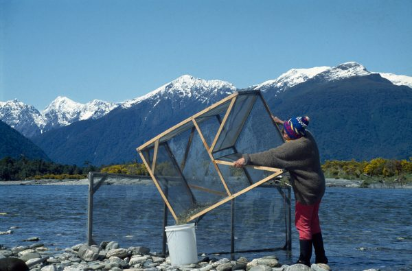 With the snow-capped Southern Alps as a backdrop, Jat Miller empties a set net on the Mahitahi River.