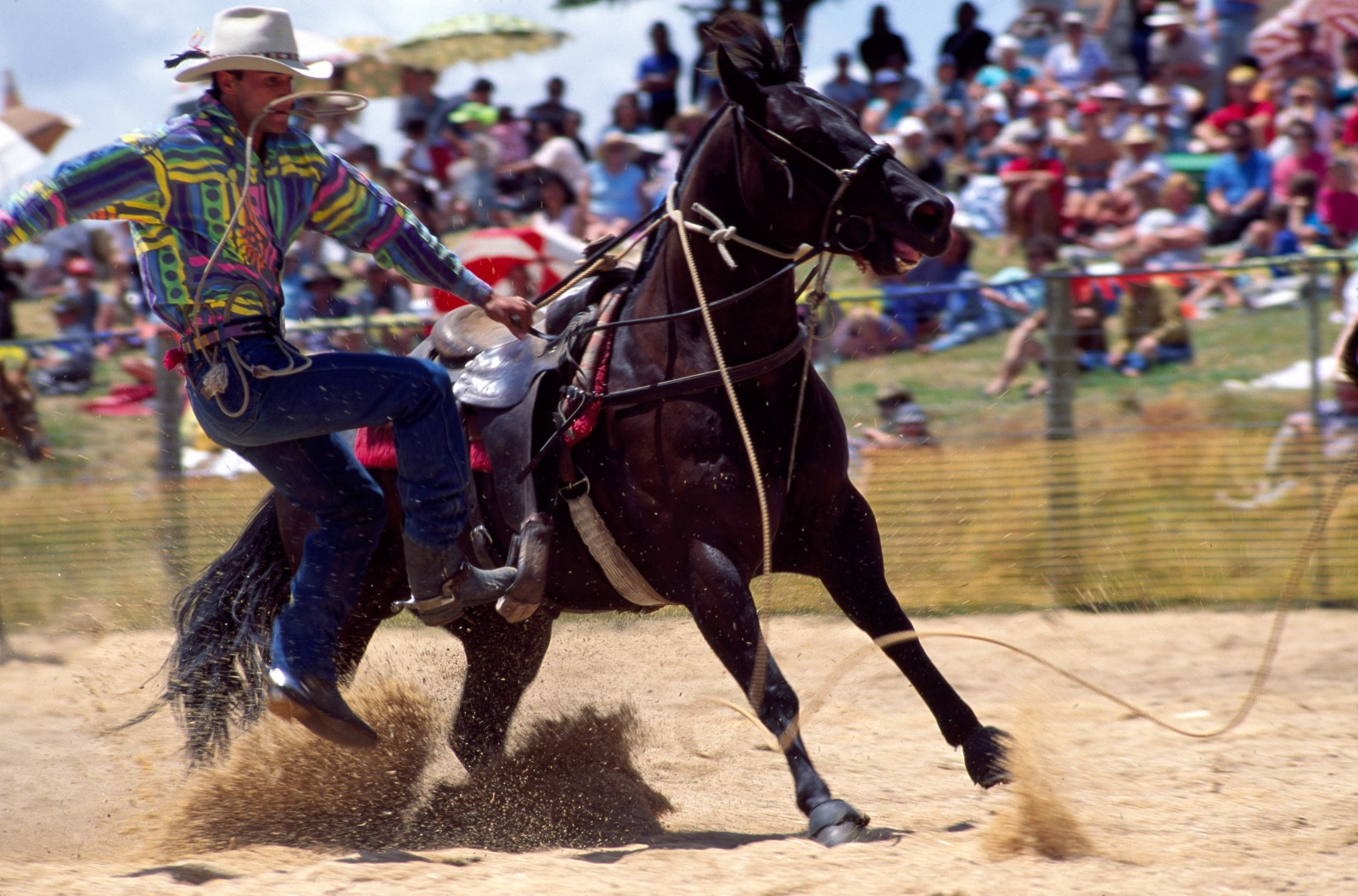 All the skills of the cowboy are marshalled for the calf-roping event. Mastery of the mount, split-second timing and a deadly eye combine in a slow-motion dance that, for an expert, lasts a mere ten seconds or less. Rex Church (left), a past New Zealand bareback champion, slips deftly from his horse to haul up on his lasso; Linsay Taylor (above), holder of the current calf-roping record, executes a perfect throw.