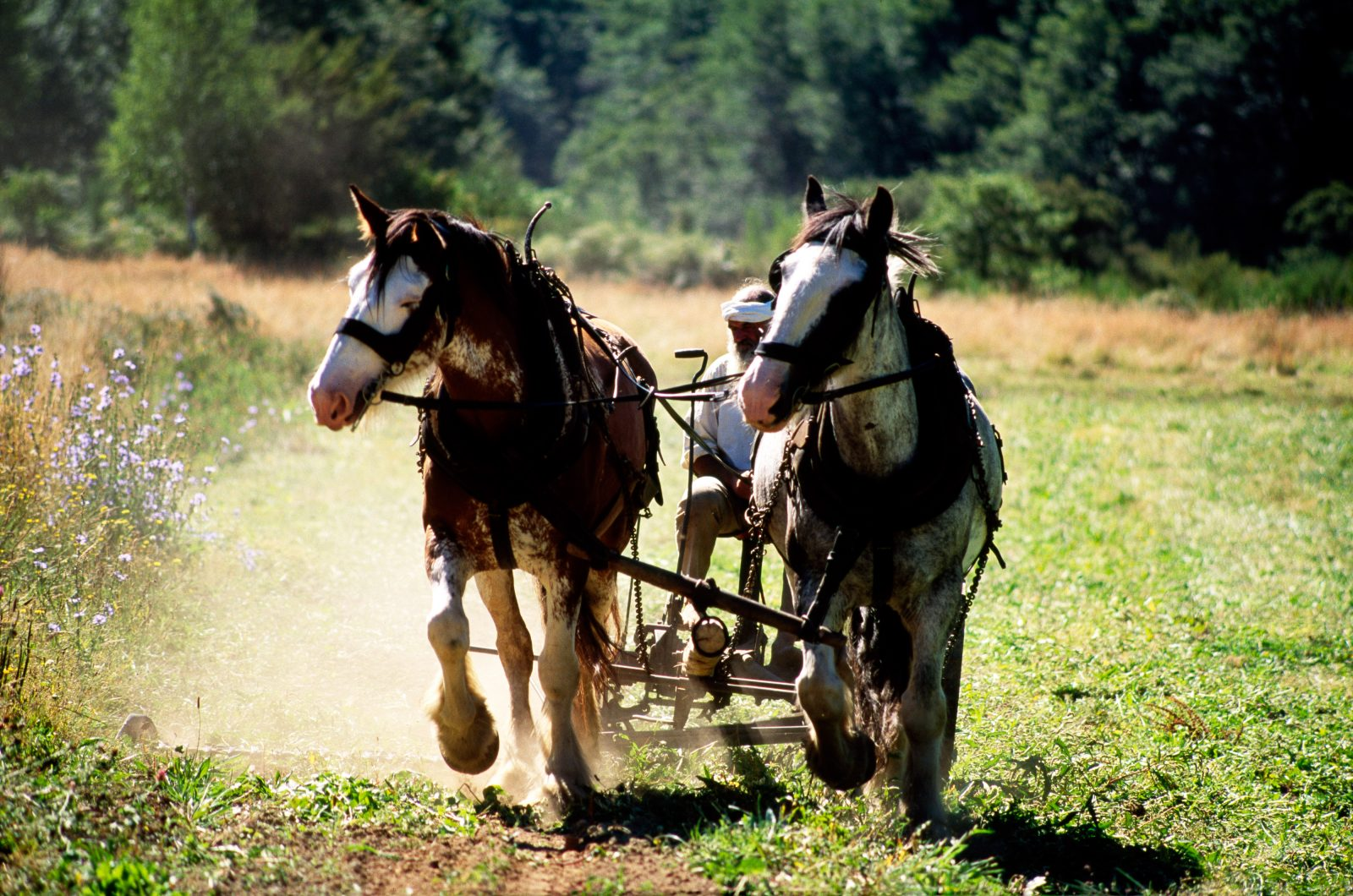 "Organic farmer Stephen McGrath favours the grass-fed variety of horsepower, whether it is for drawing a sickle-bar mower to top the buckwheat or hauling his wagons about the district. ""The faster you go, the less time you're got,"" says . McGrath—a sentiment that would find some resonance among the numerous lifestylers drawn to the remote district by its unhurried ways,"