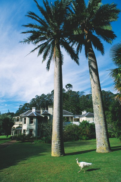 Grey believed horticulture held the key to New Zealand's future, and he led the way with enthusiasm, importing and trialling thousands of plant species on Kawau, including these imposing Chilean wine palms. He was the second person to import Pinus radiata to the country, and co-authored a booklet in 1864 advocating its widespread planting.