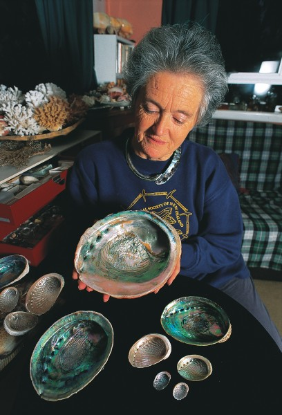 Globally, there are some 70 species of abalone. Auckland shell collector Fiona Thompson possesses a specimen of the world's largest, from California, but, as with most abalone, its colours are less vibrant than those of our own Haliotis iris, the common black footed paua. Between the two examples of H. iris is a specimen of queen paua, H. australis, a smaller local species with a silvery shell, and three regional varieties of our third species, the virgin paua, H. virginea.
