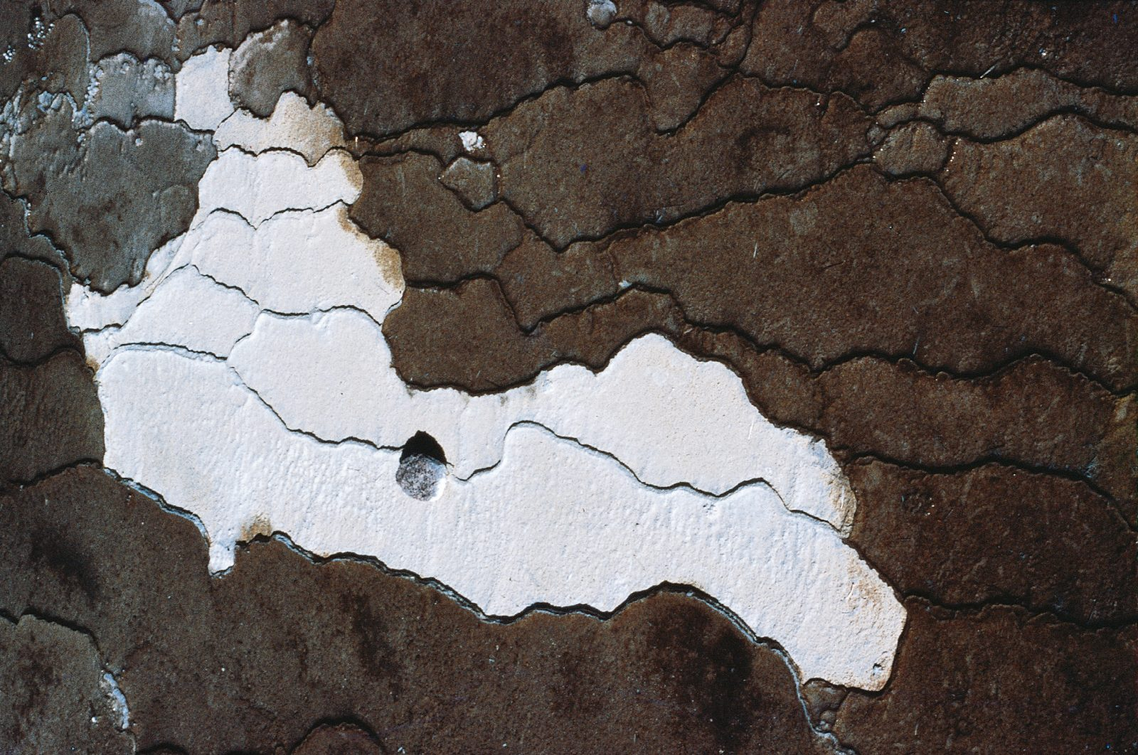 A stone thrown casually into a sinter terrace at Waiotapu has been cemented where it fell by the silica-containing water. The white areas are dry ponds surrounded by algae-coloured, water-filled ponds.