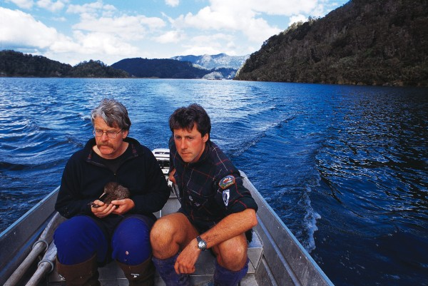 John McLennan (left) and Jonathan Miles, two of the 20 or so biologists engaged in kiwi recovery work throughout the country, have eradicated stoats from this finger of land, and prevent their return by maintaining a trapline across its base. The young North Island brown kiwi McLennan holds is about to be released to the safety of the peninsula.
