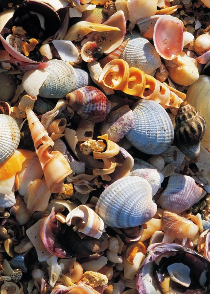 From 1930 to 1970, Bernard Walker collected thousands of sacks of shell from the south~western beach of Quail Island which now bears his name, selling the material as grit for chicken feed.