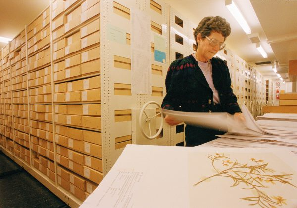 HUndreds of thousands of delicate dried plants—including many collected by Joseph Banks and Daniel Solander on Captain Cook's first voyage—are preserved by acid-free mounting paper, temperature-controlled rooms and the labours of curators and dedicated volunteers, such as Chris Ashton.